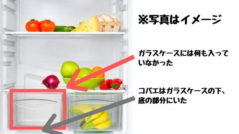 死ん 冷蔵庫 でる コバエ